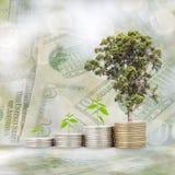 Alberi che crescono sulla moneta con il fondo della sfuocatura della natura e della banconota, B Fotografia Stock Libera da Diritti