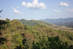 Alberi che crescono sulla montagna Fotografia Stock Libera da Diritti