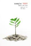 Alberi che crescono in un mucchio di soldi. Fotografia Stock
