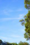 Alberi che incorniciano cielo nuvoloso blu Immagini Stock