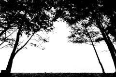 Alberi che incorniciano spazio bianco vuoto Immagine Stock