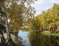 Alberi che riflettono nel fiume Immagine Stock
