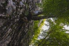 Alberi che scalano le rocce Fotografie Stock Libere da Diritti