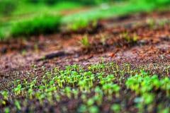 Alberi che seguono la terra naturalmente sempre bella immagine stock