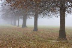 Alberi che si sbiadicono nella nebbia Immagine Stock