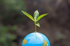 Alberi che si sviluppano sul globo Piantatura degli alberi per ridurre riscaldamento globale, giornata per la Terra dell'ambiente fotografia stock libera da diritti
