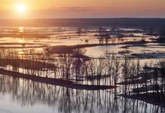 Alberi che stanno in acqua durante l'alta marea di fonte al tramonto Immagine Stock Libera da Diritti
