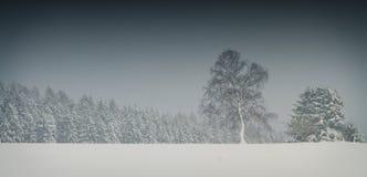 Alberi che stanno nelle circostanze nevose scure Immagine Stock Libera da Diritti