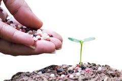 Alberi chimici del fertilizerforyoung Immagine Stock