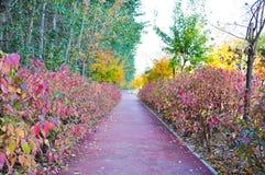 Alberi Colourful da entrambi i lati della strada in autunno immagini stock libere da diritti