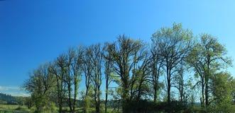 Alberi come osservano in autunno lo Stato del Washington nazionale della riserva di Ridgefield Immagine Stock