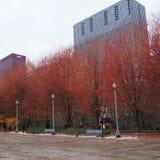 Alberi con i colori strabilianti in Chicago fotografia stock libera da diritti