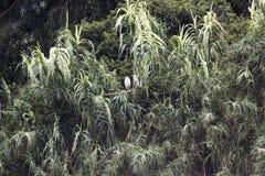Alberi con il nido degli uccelli Immagine Stock
