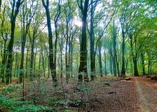Alberi con il sole dietro gli alberi fotografie stock libere da diritti