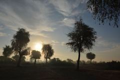 Alberi con il tramonto a desser fotografie stock libere da diritti