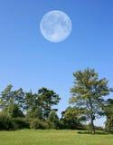 Alberi con la luna Immagine Stock