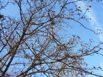 Alberi con le foglie cadute Fotografia Stock