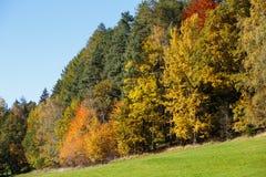 Alberi con le foglie di colore Immagini Stock Libere da Diritti