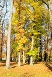 Alberi con le foglie variopinte in autunno Fotografia Stock Libera da Diritti