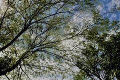 Alberi con le foglie verdi Fotografia Stock Libera da Diritti