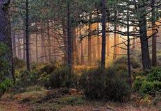 Alberi con luce solare in Corsica fotografia stock libera da diritti