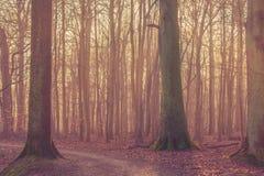 Alberi con muschio nella foresta Fotografia Stock Libera da Diritti
