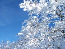 Alberi con neve Fotografia Stock Libera da Diritti