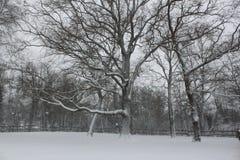 Alberi con neve Fotografia Stock