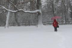Alberi con neve Immagine Stock Libera da Diritti