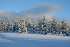 Alberi con neve fotografie stock