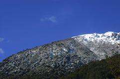 Alberi con neve Immagini Stock