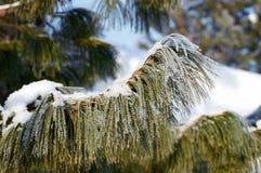 Alberi congelati Immagini Stock Libere da Diritti