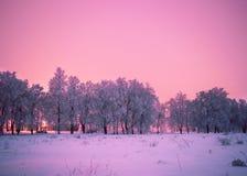 Alberi congelati dal racconto fary fotografia stock