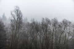 Alberi congelati di inverno in foresta il giorno nebbioso della nebbia Immagine Stock