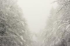 Alberi congelati e nevosi nell'inverno fotografie stock libere da diritti
