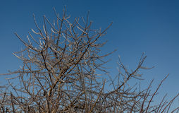 Alberi congelati in ghiaccio Immagine Stock