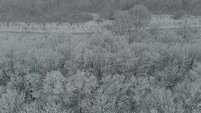 Alberi congelati metraggio aereo del fuco in ghiaccio nella nebbia 4k di inverno archivi video