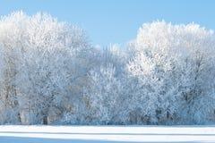 Alberi congelati sul campo fotografia stock