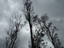 Alberi contro il cielo Fotografia Stock