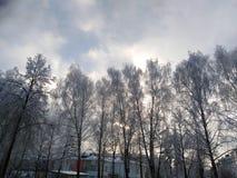 Alberi CONTRO il cielo nuvoloso fotografia stock