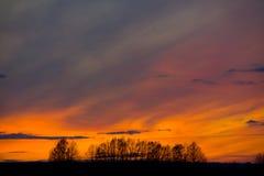 Alberi contro il contesto del tramonto Immagine Stock