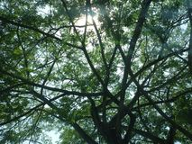 Alberi contro luce solare Fotografia Stock