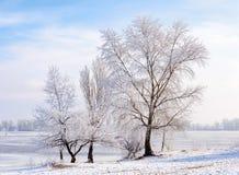Alberi coperti da gelo, da ghiaccio e da neve vicino al fiume di Dnieper Fotografie Stock Libere da Diritti