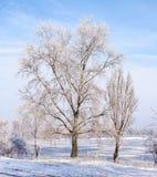 Alberi coperti da gelo, da ghiaccio e da neve vicino al fiume di Dnieper Fotografia Stock Libera da Diritti