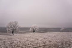 Alberi coperti da gelo invernale fotografie stock