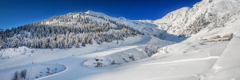 Alberi coperti da neve fresca nelle alpi dell'Austria - arena di Zillertal, A Fotografia Stock