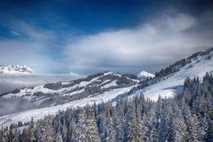 Alberi coperti da neve fresca nelle alpi di Tyrolian, Kitzbuehel, Austria Immagini Stock