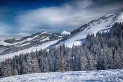 Alberi coperti da neve fresca nelle alpi di Tyrolian, Kitzbuehel, Austria Fotografie Stock
