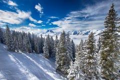 Alberi coperti da neve fresca nelle alpi di Tyrolian, Kitzbuehel, Austria Fotografia Stock