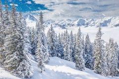 Alberi coperti da neve fresca nelle alpi di Tyrolian, Kitzbuhel, Austria Fotografia Stock
